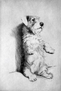 The Sealyham Terrier Derives Its Name From Haverfordwest Wales Estate Of Captain John Edwardes Who Developed Obscure Ancestry A Strain